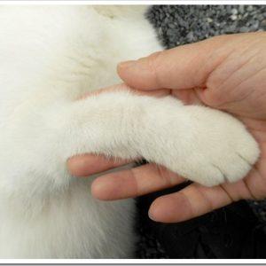 猫もお手を覚えるの?猫にお手を教える方法について。