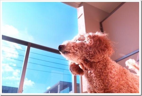 ペット可の集合住宅で愛犬との散歩で守るべき3つのマナーについて。