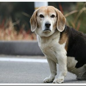猟犬ってどんな犬?狩猟犬の歴史や特徴、種類について。