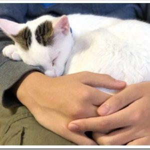 人に懐きやすい猫って?人懐っこい猫ランキング、Top5について。