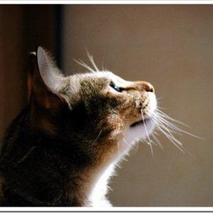 猫のチャームポイント「ヒゲ」。抜けても大丈夫なの?ヒゲの特徴や役割について。