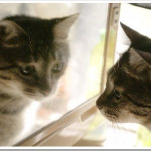 その症状、もしかしたら皮膚病かも?猫の皮膚病の種類と特徴について。