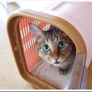 動物病院に行った時、あなたはどう過ごしてますか?動物病院内でのマナーについて。