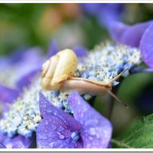 カタツムリの種類ってどれくらい?日本にいるカタツムリの種類と特徴について。