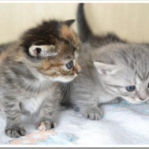 保護した子猫の里親を探したい!保護した子猫の里親を探す方法について。