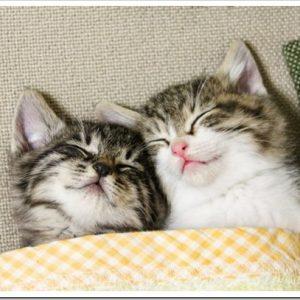 好き嫌いをしない猫に育てたい!子猫の頃からやっておくことについて。