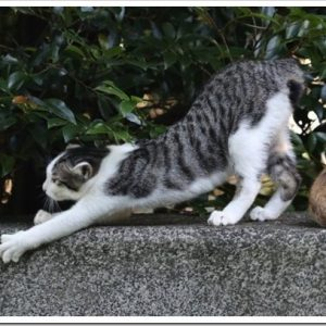 綺麗な姿勢で健康的!自宅で出来る猫背を改善するストレッチについて。