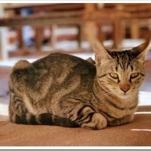 猫の座り方6種類と、その時の猫の気持ちとリラックス状態について。