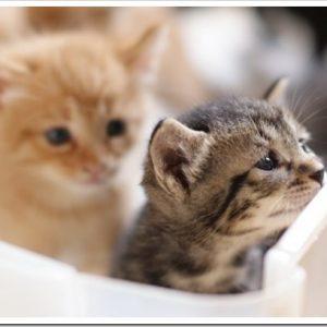 猫の多頭飼育をしたい!相性の良い組み合わせってあるの?