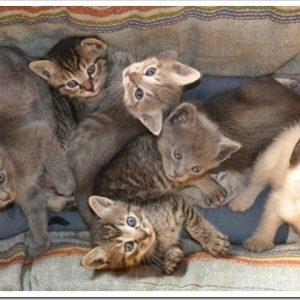 猫を多頭飼育するメリットとデメリットは?猫同士の関係はどうなっているの?
