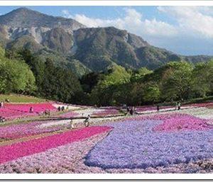 都心からちょっと足を伸ばして、埼玉に春を見つけに行こう!