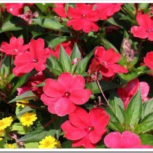 夏の花を育ててみませんか?人気の夏の花、10種類について。