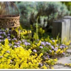 庭が日陰でも大丈夫!シェードガーデンで楽しめて花を咲かせる植物について。