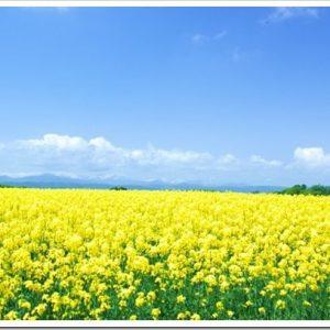 マツコの知らない世界「黄色の世界」のネタバレと感想とまとめ。